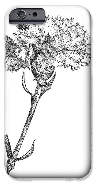 Petals Drawings iPhone Cases - Carnation iPhone Case by Christy Beckwith