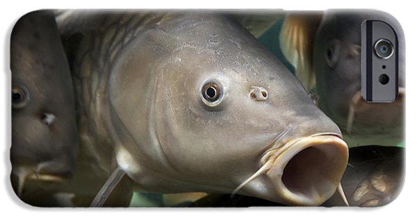 Angling iPhone Cases - Carp iPhone Case by Jane Rix