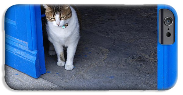 Bob Cats iPhone Cases - Cat At The Doorway iPhone Case by Bob Christopher