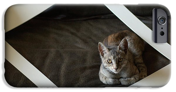 Frame House Photographs iPhone Cases - Cat in a Frame iPhone Case by Micah May