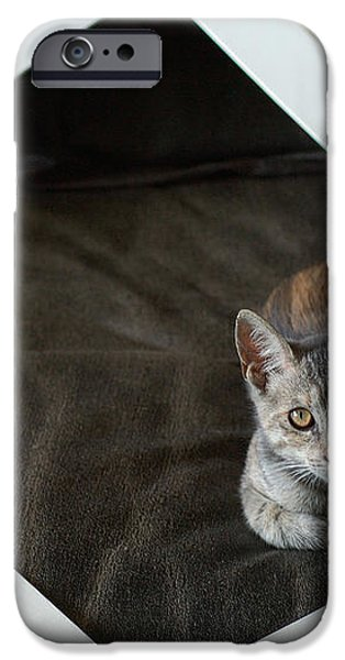 Cat in a Frame iPhone Case by Micah May