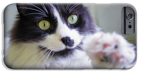 Gray Hair iPhone Cases - Cat Reaches for Camera iPhone Case by Lori Coleman