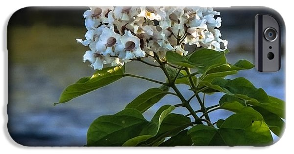 Haybale iPhone Cases - Catalpa Beauty iPhone Case by Robert Bales
