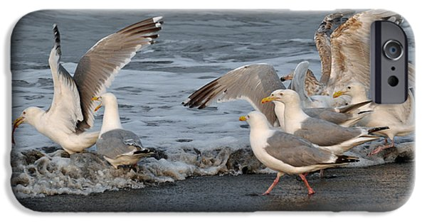 Seagull iPhone Cases - Catch Me If You Can  iPhone Case by Debra  Miller