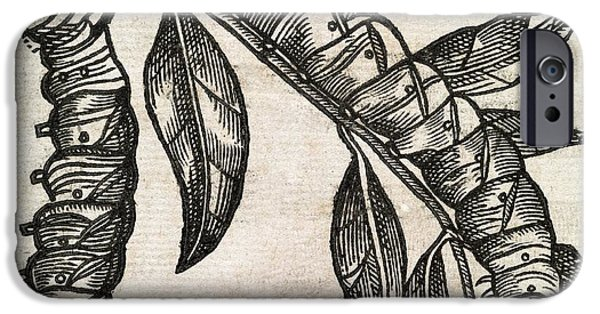 Eating Entomology iPhone Cases - Caterpillars, 17th Century Artwork iPhone Case by Middle Temple Library