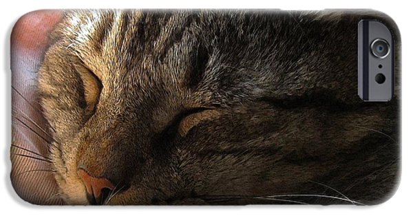 Photos Of Cats iPhone Cases - Catnap iPhone Case by Dale   Ford