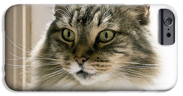 Wonderous iPhone Cases - Cats Are Magical iPhone Case by Gwyn Newcombe