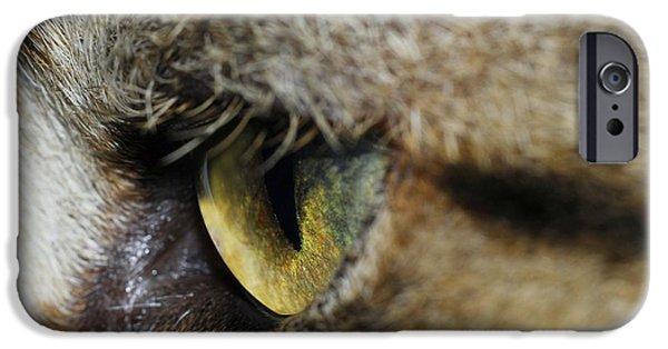 Felis iPhone Cases - Cats Eye iPhone Case by Cordelia Molloy