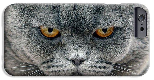 Felis iPhone Cases - Cats Head iPhone Case by Ria Novosti