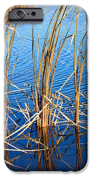 Cattail Reeds iPhone Case by Ms Judi