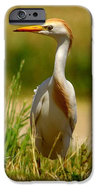 Cattle Egret iPhone Cases - Cattle Egret With Closed Eyelid iPhone Case by Robert Frederick