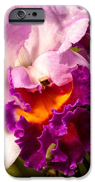 Cattleya III iPhone Case by Christopher Holmes