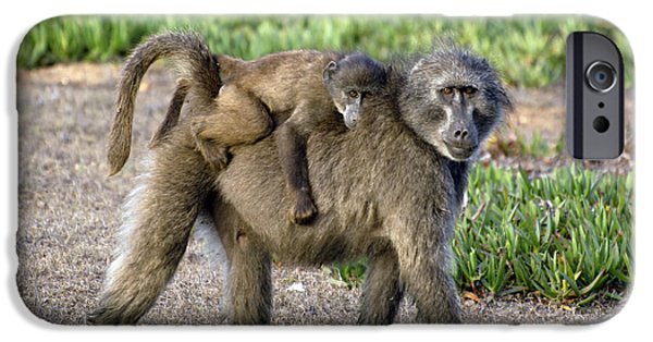 Parental Care iPhone Cases - Chacma Baboon Mother And Young iPhone Case by Peter Chadwick