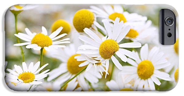 Meadow Photographs iPhone Cases - Chamomile flowers iPhone Case by Elena Elisseeva