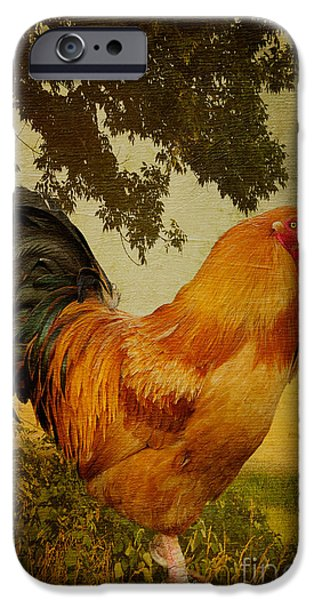 Lois Bryan iPhone Cases - Chanticleer iPhone Case by Lois Bryan