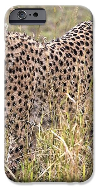 Cheetah Acinonyx Jubatus, Masai Mara iPhone Case by Chris Upton