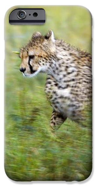 Cheetah Acinonyx Jubatus, Running iPhone Case by Carson Ganci