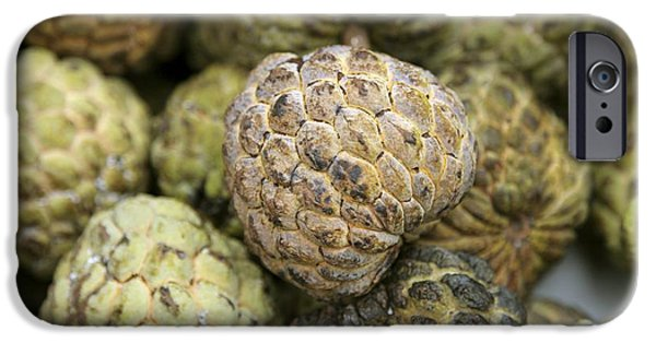Annona iPhone Cases - Cherimoya Fruit (annona Cherimola) iPhone Case by Bjorn Svensson