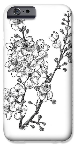 Studio Drawings iPhone Cases - Cherry Blossems iPhone Case by Christy Beckwith