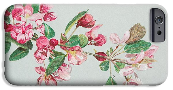 Flora Drawings iPhone Cases - Cherry Blossom iPhone Case by Glenda Zuckerman