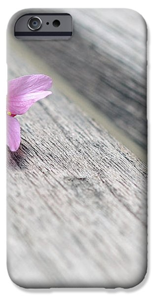 Cherry Blossom on Bench iPhone Case by Lisa  Phillips