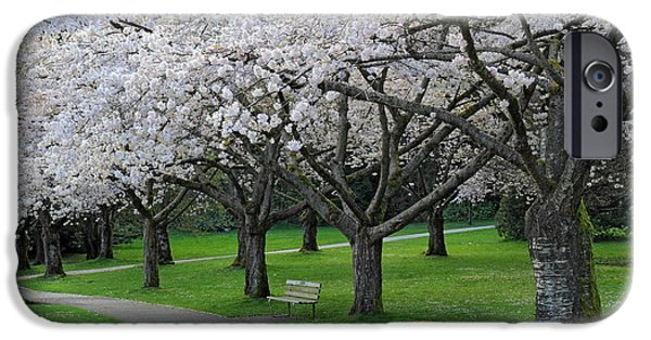 Stanley Park iPhone Cases - Cherry Blossom park iPhone Case by Pierre Leclerc Photography