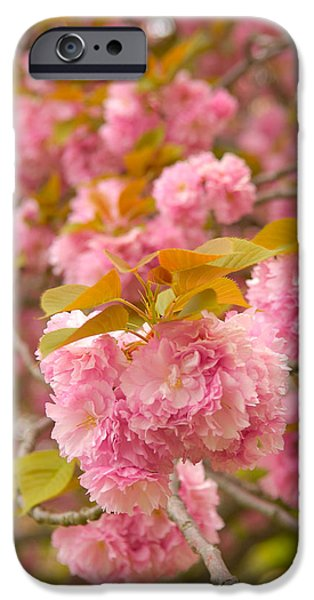 Blossom iPhone Cases - Cherry Blossom iPhone Case by Sebastian Musial