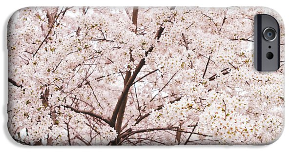 Cherry Blossoms iPhone Cases - Cherry Blossom Spring iPhone Case by Ariane Moshayedi