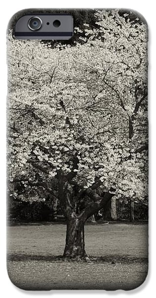 Cherry Blossom Tree - Ocean County Park iPhone Case by Angie Tirado