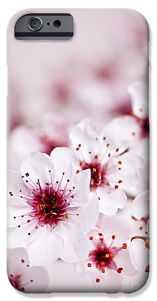 Plant iPhone Cases - Cherry blossoms iPhone Case by Elena Elisseeva