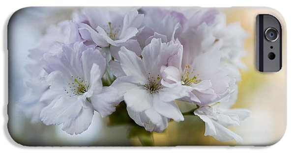 Cherry Blossoms iPhone Cases - Cherry blossoms iPhone Case by Frank Tschakert