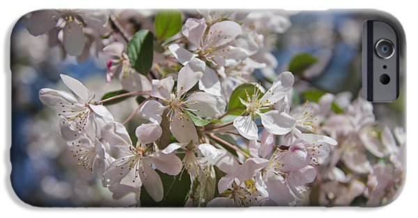 D.c. iPhone Cases - Cherry Blossoms iPhone Case by Joan Carroll