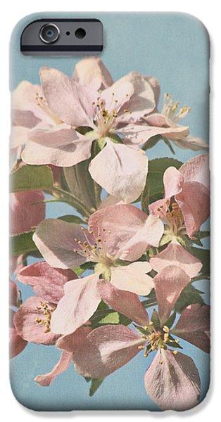 Cherry Blossoms iPhone Case by Kim Hojnacki