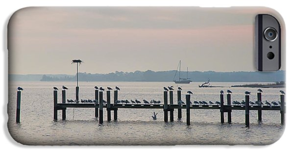 Chesapeake iPhone Cases - Chesapeake Seagulls iPhone Case by Bill Cannon