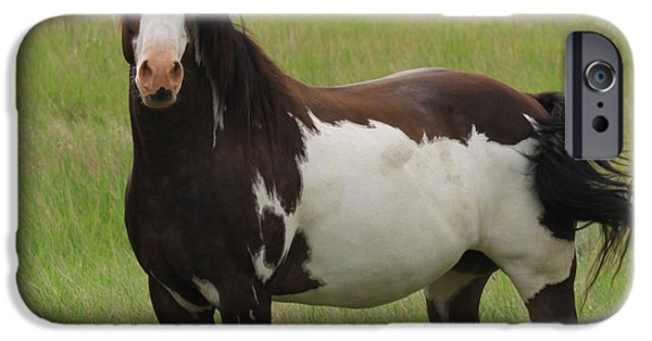 Pleasure iPhone Cases - Chestnut Overo Paint Stallion iPhone Case by Karon Melillo DeVega