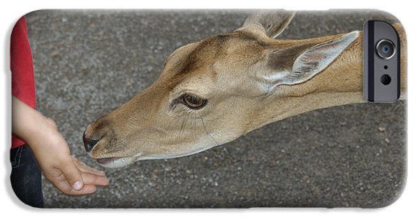 Intimacy Photographs iPhone Cases - Child feeding deer iPhone Case by Matthias Hauser