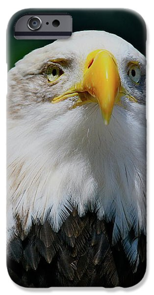 Chin Up iPhone Case by Laddie Halupa