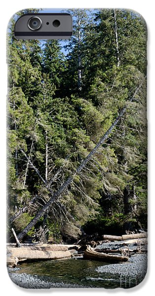 China Beach iPhone Cases - CHINA CREEK china beach juan de fuca provincial park BC canada iPhone Case by Andy Smy