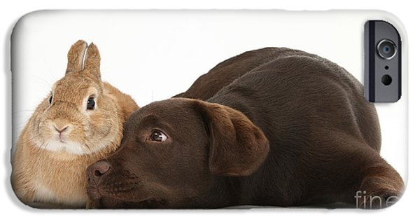 Chocolate Lab iPhone Cases - Chocolate Lab & Netherland-cross Rabbit iPhone Case by Mark Taylor