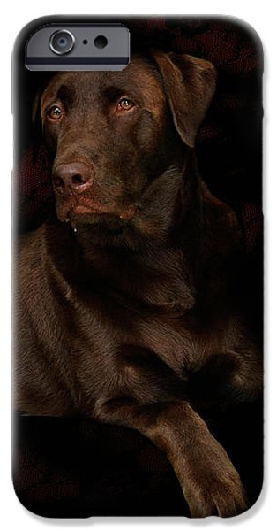 Chocolate Lab Dog iPhone Case by Christine Till