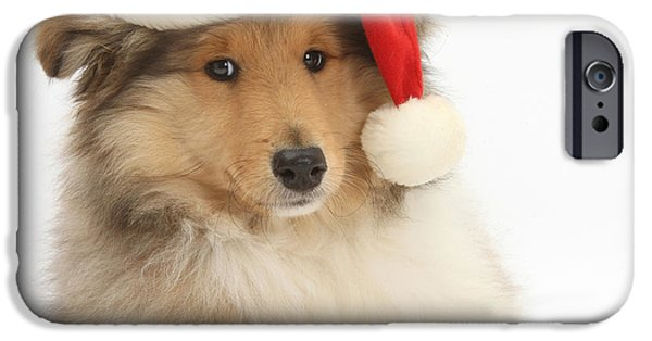 Cute Puppy iPhone Cases - Christmas Collie Pup iPhone Case by Mark Taylor