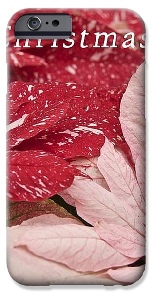 Christmas Poinsettias iPhone Case by Michael Peychich