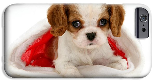 Puppies iPhone Cases - Christmas Spaniel iPhone Case by Jane Burton