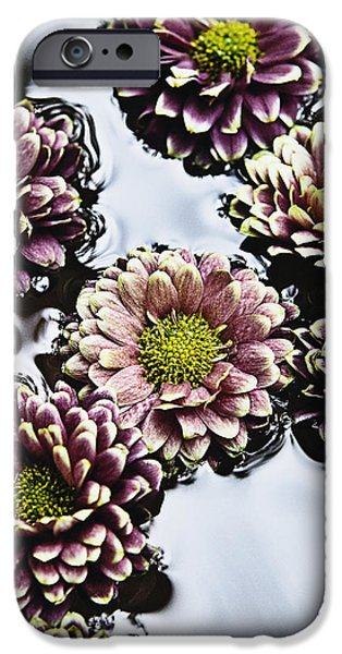 Chrysanthemum 3 iPhone Case by Skip Nall