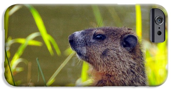 Groundhog iPhone Cases - Chucky Woodchuck iPhone Case by Paul Ward