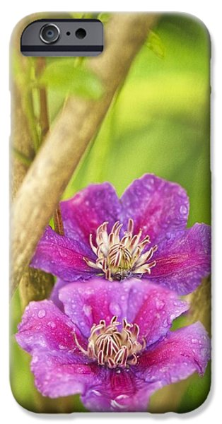 July iPhone Cases - Clematis Sp iPhone Case by Maria Mosolova