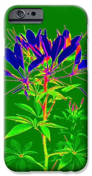 Cleome gone abstract iPhone Case by Kim Galluzzo Wozniak