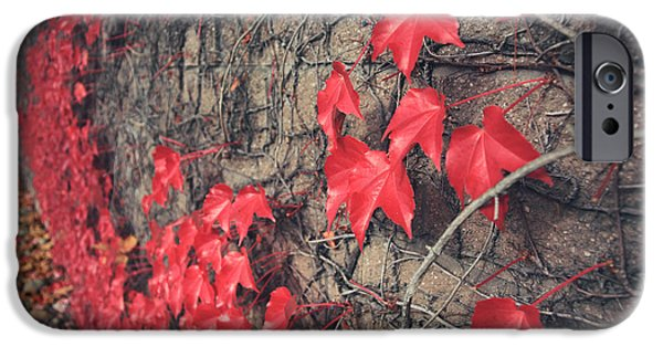 Vine Leaves iPhone Cases - Clinging iPhone Case by Laurie Search