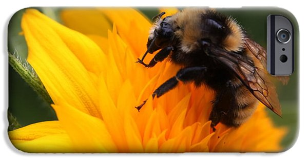 Teddybear iPhone Cases - Close-up Bee on Sunflower iPhone Case by Marjorie Imbeau