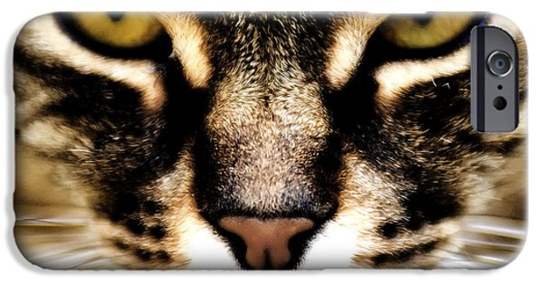 Housecat iPhone Cases - Close up shot of a cat iPhone Case by Fabrizio Troiani